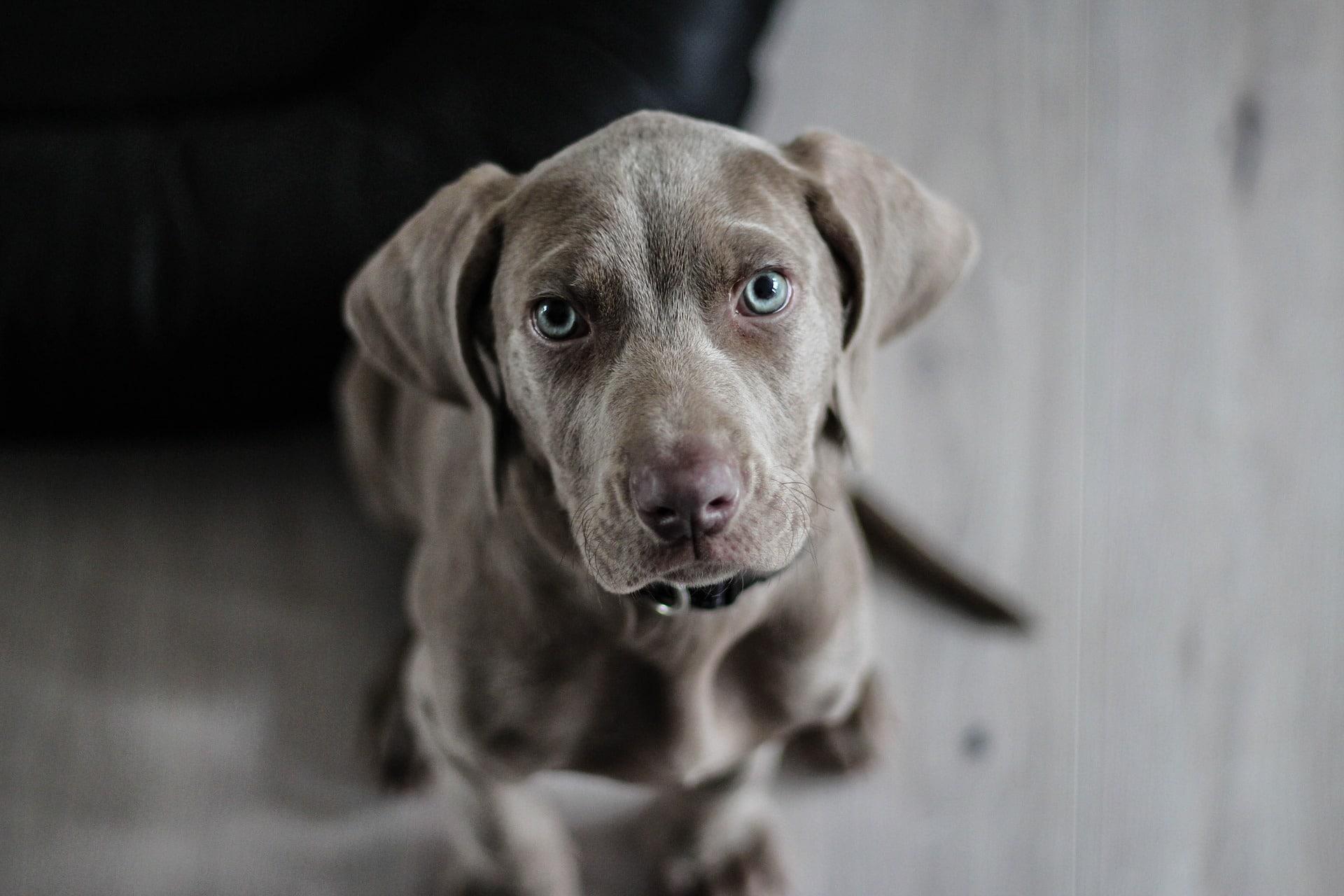 Hansemerkur Hunde Haftpflicht