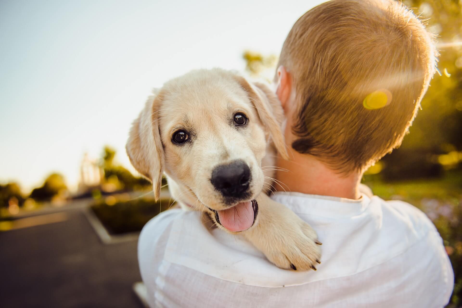 HanseMerkur Hunde OP Versicherung